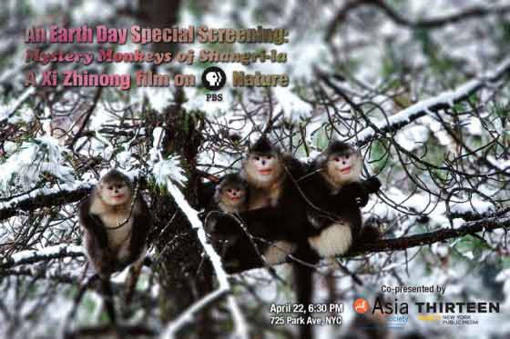 Mystery Monkeys of Shangri-la