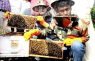 """Madhu Sandesh day"" celebration to promote pollination amongst farmers & beekeepers"
