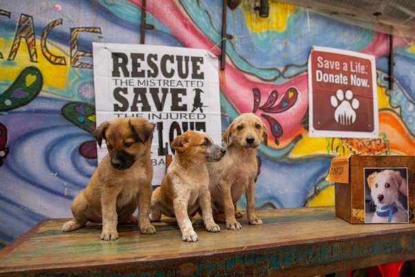 AART, Pune to organize an adoption camp on November 10