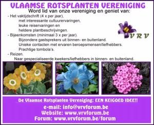 Vlaamse Rotsplanten Vereniging