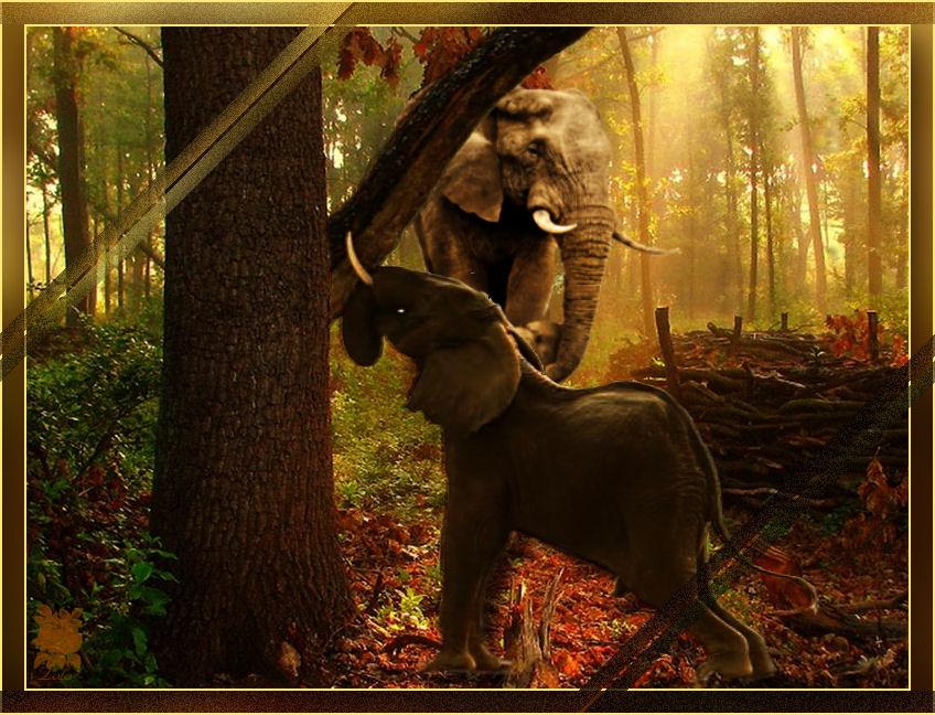 elefante-sacudiendo-un-arbo