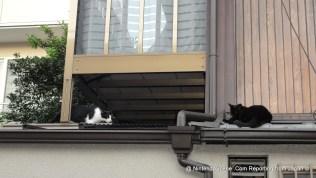 Nintendo HQ Cats