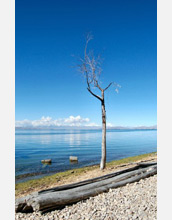 Photo of a leafless tree on the shore of Lake Titicaca.