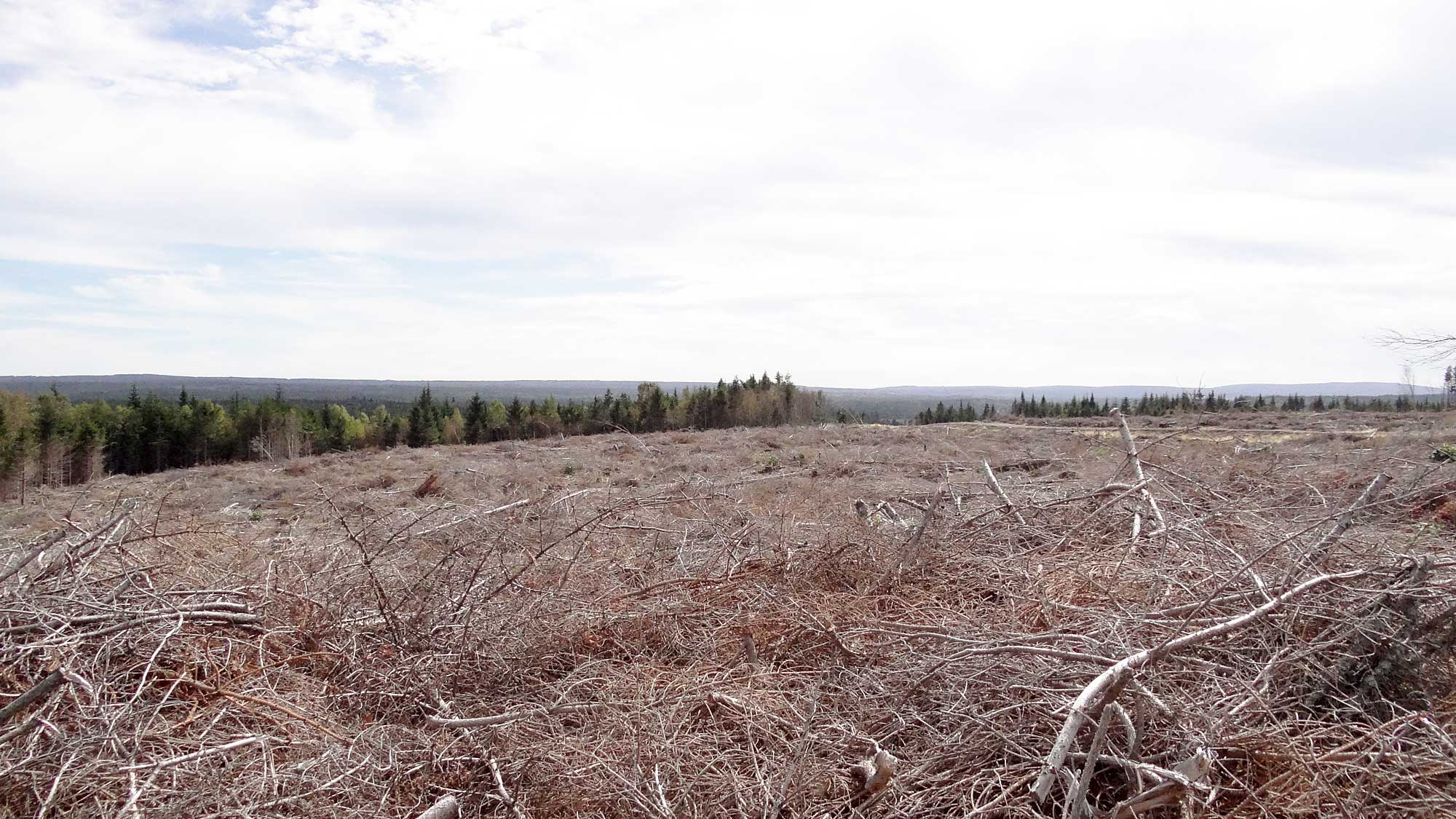 "Clearcut on Nova Scotia's eastern shore: ""A relic from an uninformed"