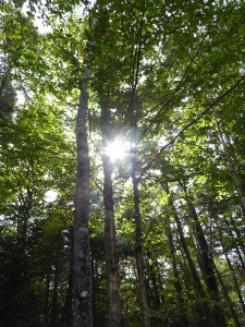 Shedding light on the science of forestry in Nova Scotia