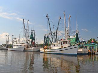 N.C. Division of Marine Fisheries—N.C. Division of Marine Fisheries