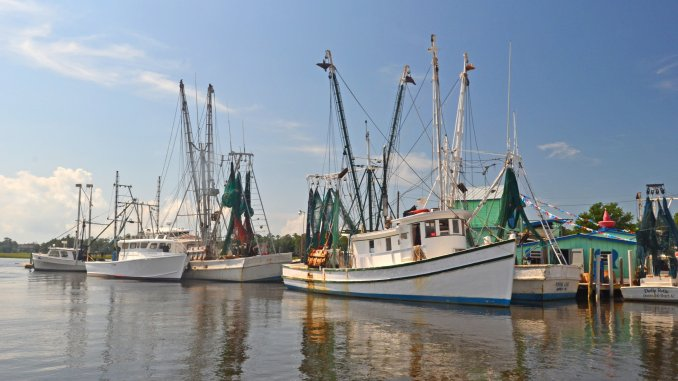 N.C. Division of Marine Fisheries—N.C. Division of Marine Fisheries