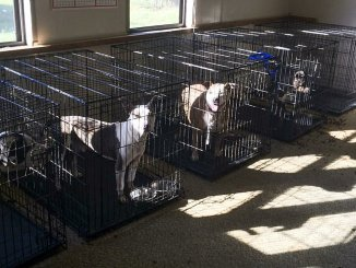 Photo Courtesy of Friends of Edgecombe County Animals—North State Journal