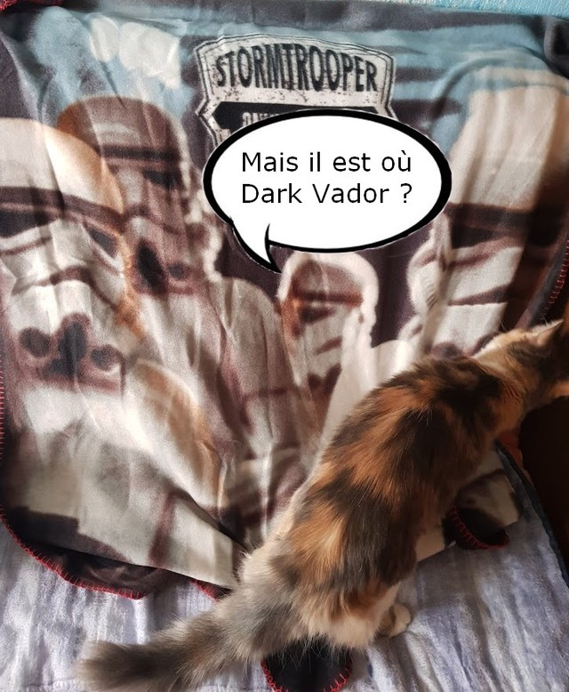 plaid star wars et mon chat