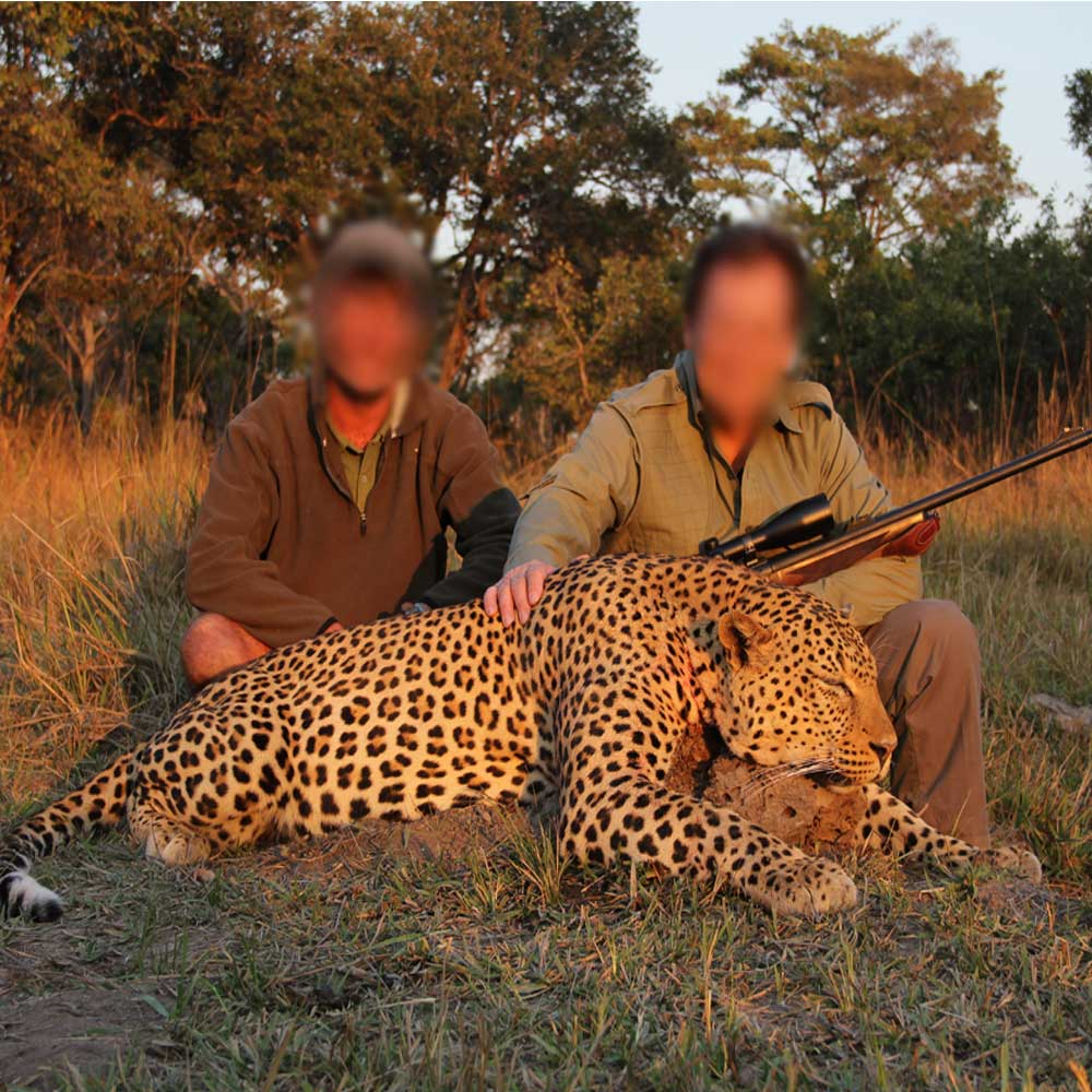 Nsonga Game Management & Lodges - Leopard hunt
