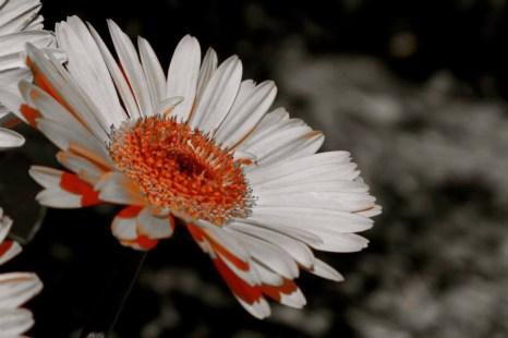 Nicola Ludwig Flower