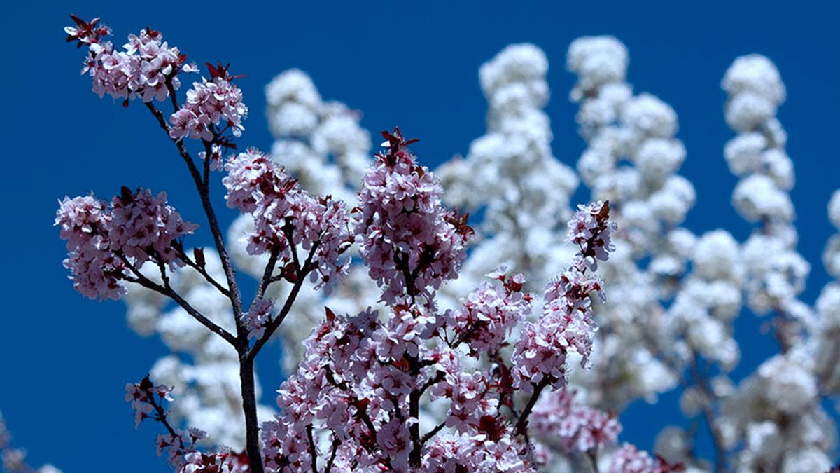 Spring Blooms Albuquerque