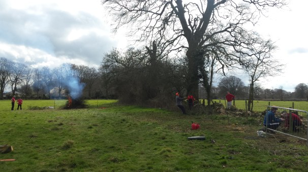 Clearing and burning trees and shrubs from the dry stone wall being rebuilt on Claverton Down.