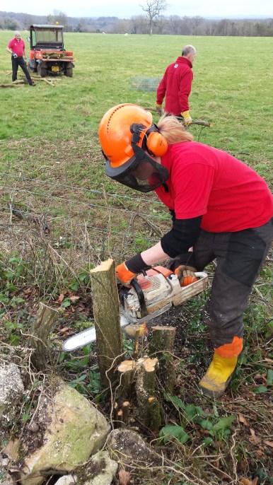 Me cutting back a felled hawthron stump.