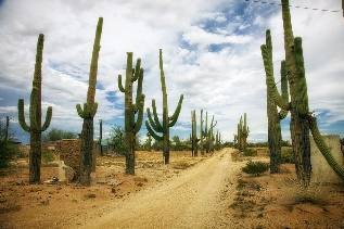 Desierto, Catus, Cactus, Dirt Road, Arizona, Paisaje