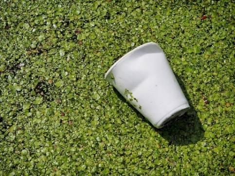 De Residuos, La Contaminación, Copa, De Basura, Camada