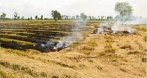 news trust of india parali burning