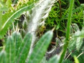 Cropped to cricket and thistles