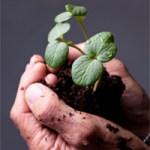 plantInHands1