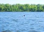 Lost Lake loon