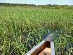 Rice Portage