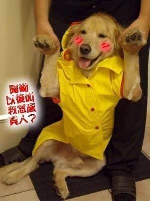 店狗Yuka五歲生日快樂