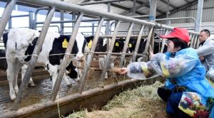 highest dairy producing countries in the world 2020