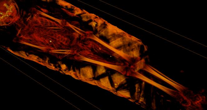 0007+Vol+RenderRed_-170+-+Ant+body