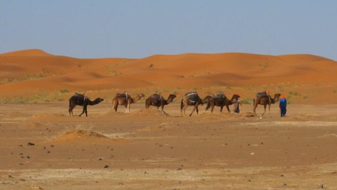 29-CaravansofGold-CamelCaravans