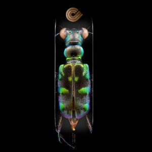 8.25″ Powell Peralta BISS Tiger Beetle