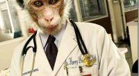 Γιατρός «μαϊμού»