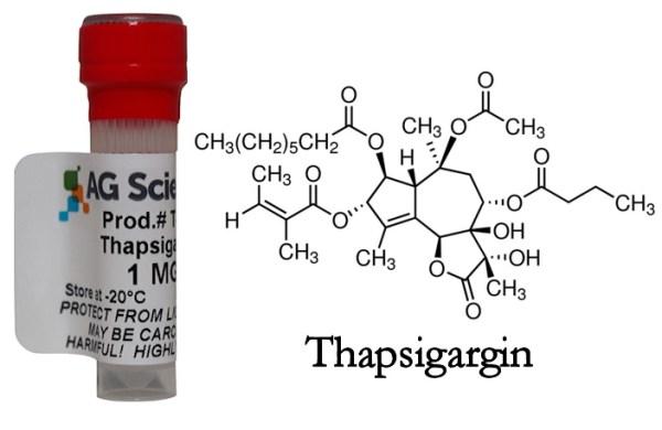 """Θαψιγαργίνη: Νέες ελπίδες από ένα παλιό φάρμακο στη """"μάχη"""" κατά του ιού"""