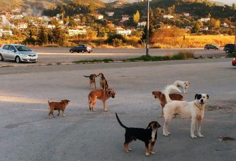 Με πειθαρχικές διώξεις απειλούνται όσοι εργαζόμενοι ταΐζουν τα αδέσποτα σκυλιά στο ΠΠΝΠ