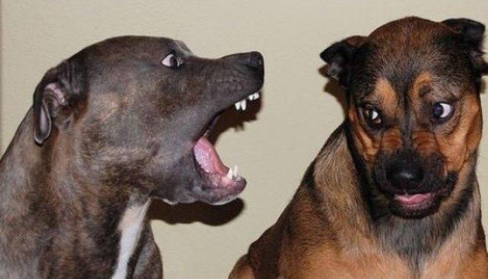 barkingdogs