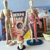 La mesa de observación del cuerpo humano
