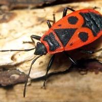 El niño y el escarabajo: cómo aprendí la humillación de Montessori