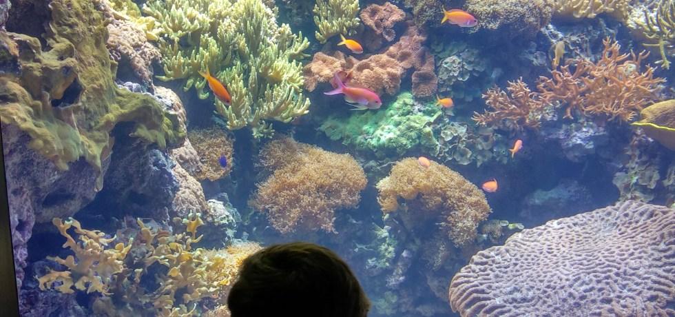 oceanario de lisboa - coral