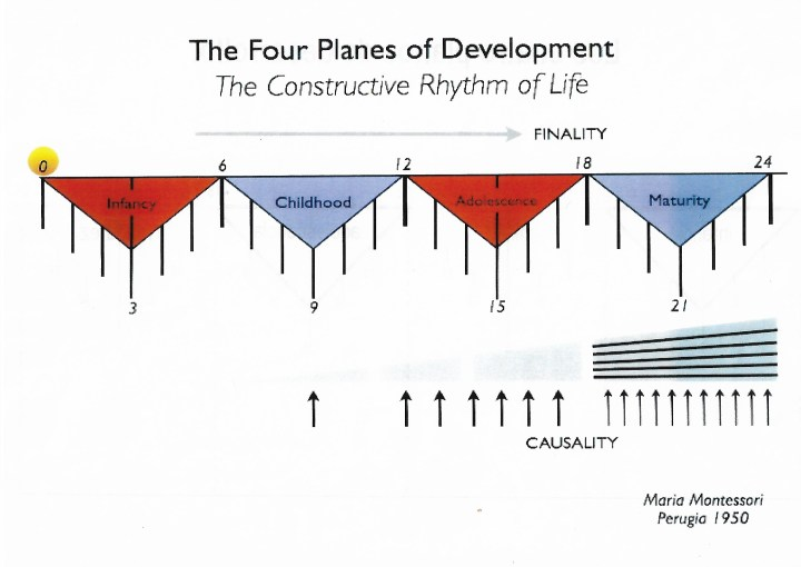 los cuatro planos de desarrollo Montessori