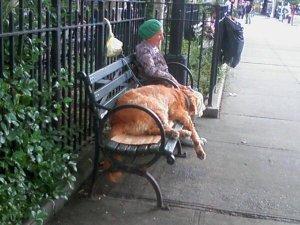 Descansando en ell Athens Park.
