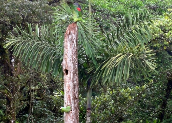 Nesting parrots at Lake Coter