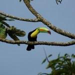 Birding at Arenal