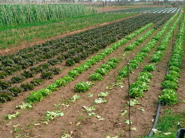 agricultura-local