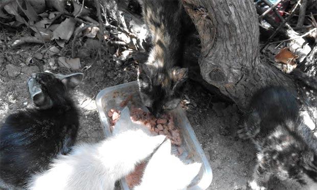 colonios-gatos