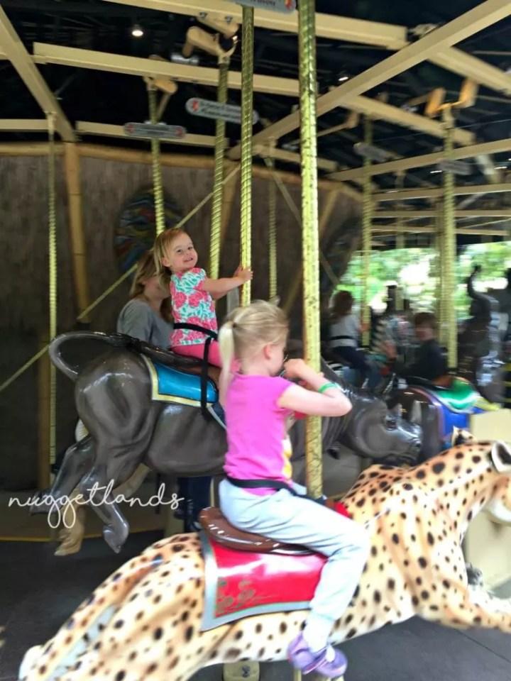 safari park carousel