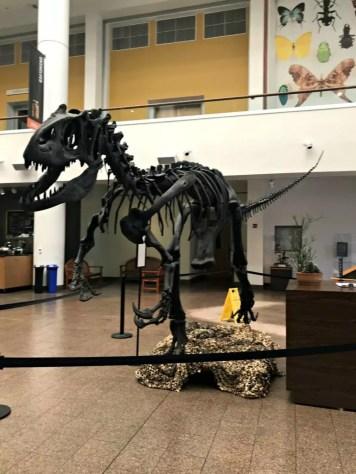 Natural History Museum Dinosaur Bones