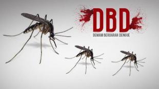 Sadari Sejak Dini, Inilah Hal-Hal yang Perlu diperhatikan dari DBD - Demam Berdarah