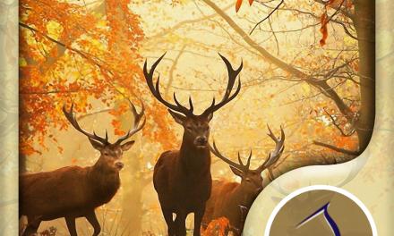Autumn Wallpaper: Best HD Wallpapers App Ios Free Download