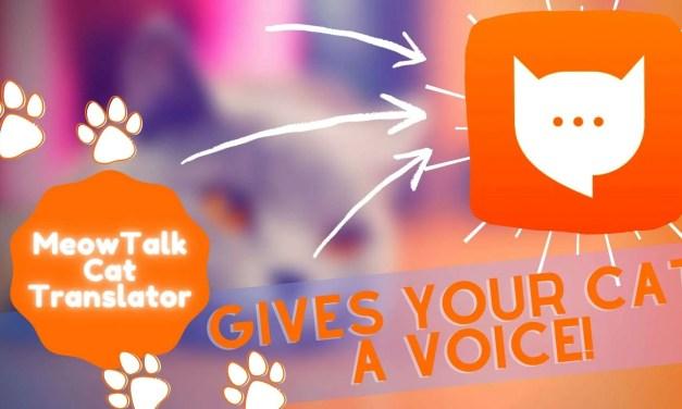 MeowTalk Cat Translator – Beta iOS