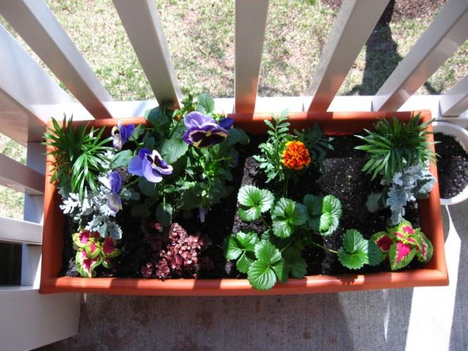2 Top Balcony Garden