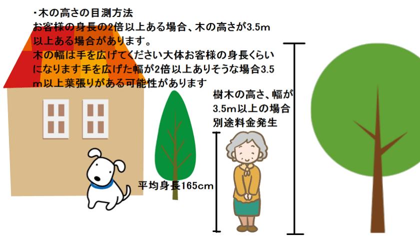 木の高さの目測方法